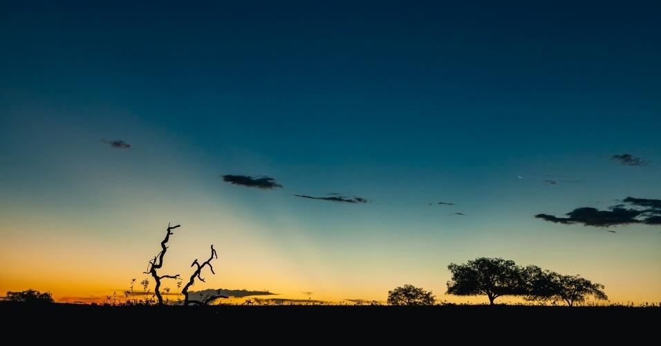 """O cerrado reúne a maior biodiversidade da América do Sul e é considerado a """"caixa d'água"""" do Brasil"""