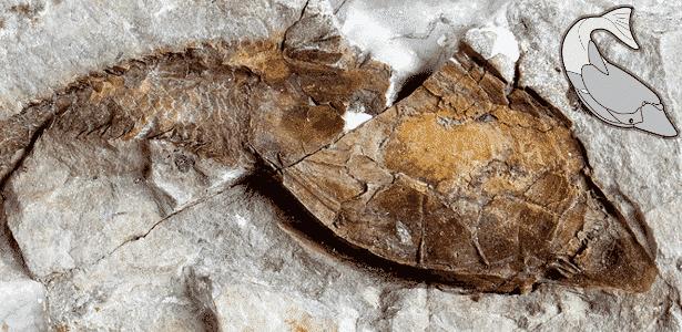 Um fóssil heterostracan datado de aproximadamente 419 milhões de anos  - Universidade de Manchester