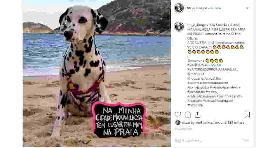 Adriana Cassas, dona da dálmata Titi, criou campanha que motivou a lei para liberar cachorros na praia no Rio de Janeiro - Instagram/Reprodução