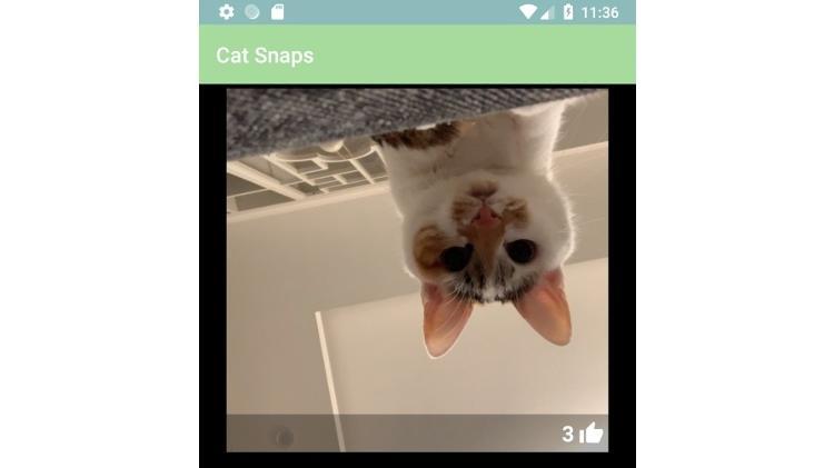 Selfie feita pelo Cats Snaps - Reprodução - Reprodução