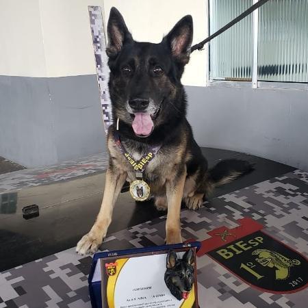 """O cachorro Ninja se """"aposentou"""" após quase 9 anos servindo a PM de Pernambuco - Divulgação/PMPE"""