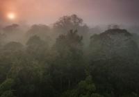 João Marcos Rosa/AmazonFACE