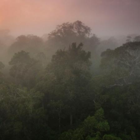Aumento de CO2 na Amazônia pode ter impacto até maior que o do desmatamento na diminuição das chuvas - João Marcos Rosa/AmazonFACE