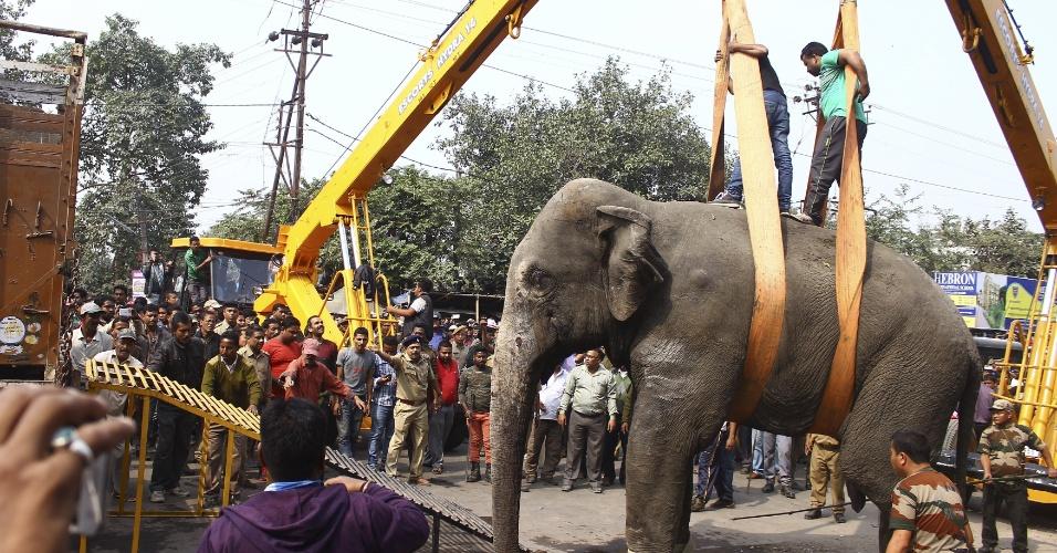 10.fev.2016 - Um elefante selvagem invadiu a pacata cidade de Siliguri, na Índia, e causou pânico. Segundo a mídia local, o animal surgiu de uma floresta próxima e só foi parado por sedativos. Guindastes foram usadas para puxar o pesado elefante