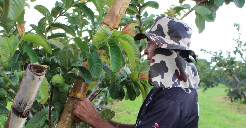 Mario Jarnoval trocou serviço de frentistas por  emprego em fazenda onde cuida de maças, uvas e gioabas