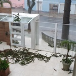 A prefeitura de Curitiba (PR) registrou hoje 321 solicitações de ocorrências com quedas de árvores ou galhos, em vias públicas e terrenos particulares - Estadão Conteúdo