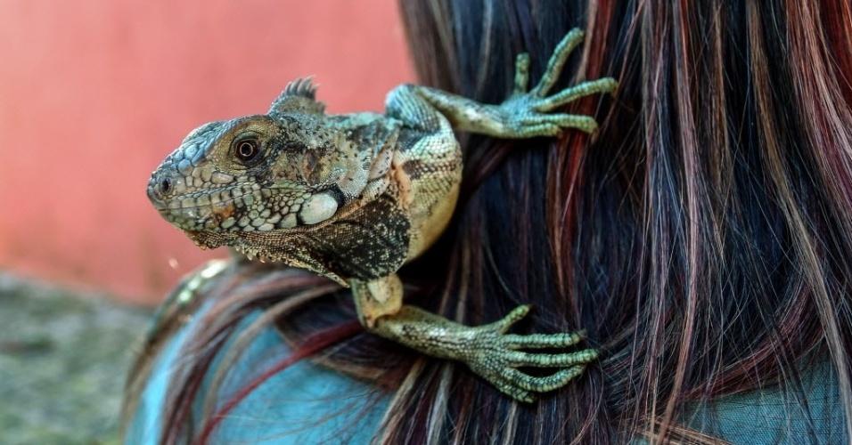 24.set.2015 - Um filhote de iguana passeia no ombro de bióloga no Parque Estoril, que abriga espécies resgatadas do comércio ilegal de animais selvagens, em São Bernardo do Campo, na Grande SP
