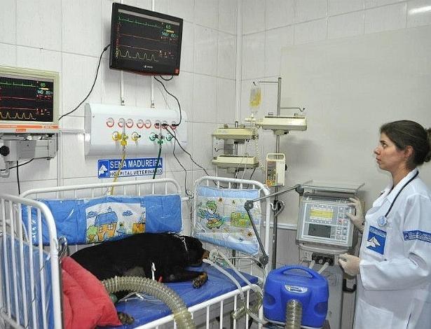 UTI do hospital veterinário Sena Madureira, em São Paulo