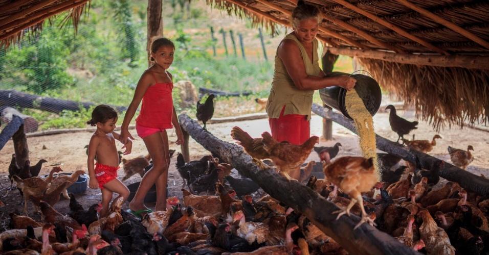 Criação de animais na serra do Centro, em Tocantins