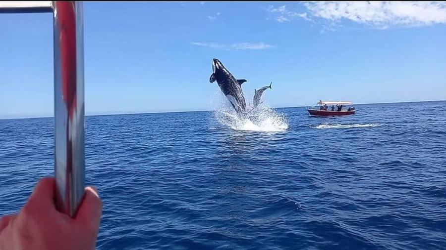 Orca dá salto impressionante durante caça - Reprodução/Instagram