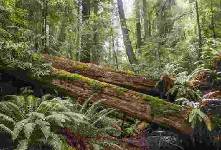 O que você acha... esta árvore fez barulho ao cair? - Getty Images - Getty Images