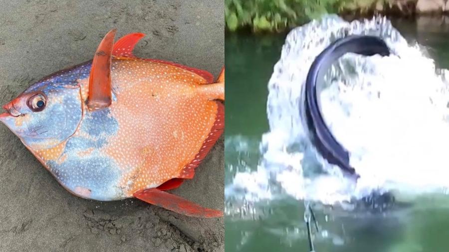 """Peixes """"bizarros"""" causam estranheza ao viralizarem na internet - Reprodução/ Facebook/ Seaside Aquarium/ Instagram"""