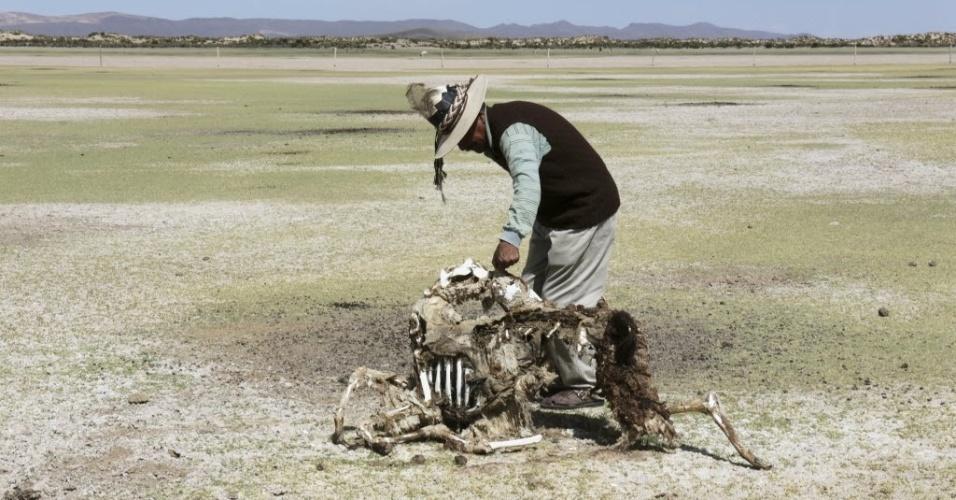 9.jan.2016 - O fazendeiro Sindulfo Fernandez segura carcaça de uma vicunha, espécie andina próxima à lhama, em Orinoca, no departamento de Oruro, na Bolívia. Dezenas de lhamas e vicunhas morreram na região devido à seca