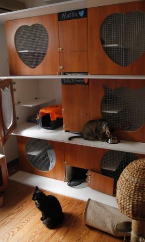 Uma das salas do hotel boutique para gatos Yellow, em Montevidéu, no Uruguai. O local dá tratamento individualizado para os felinos