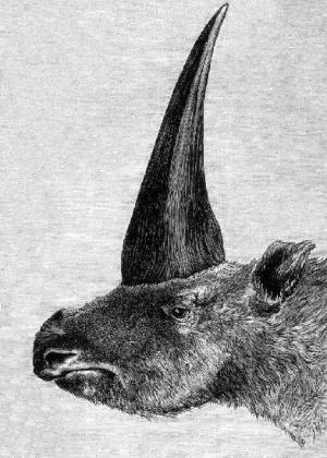 Recriação de imagem do rinoceronte de chifre comprido feita em 1878 - Wikimedia Commons/Public Domain/Rashevsky