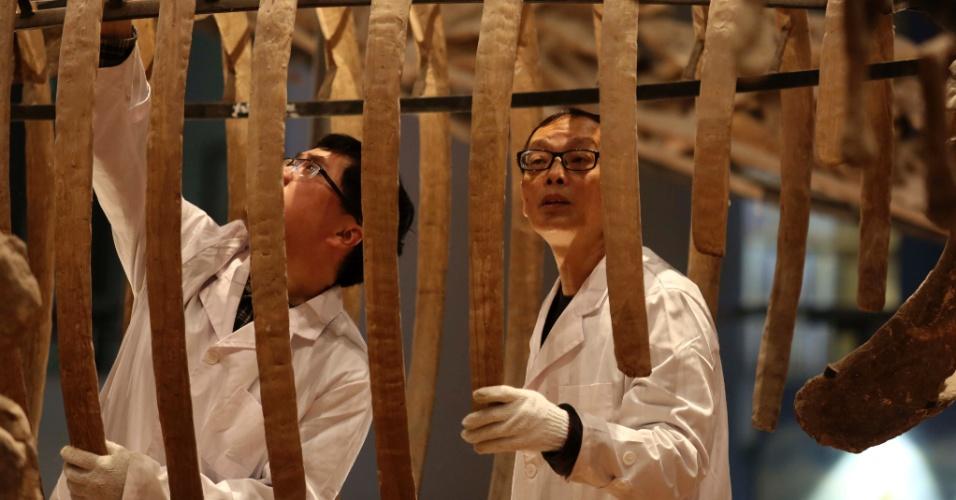 26.abr.2016 - Especialistas examinam amostra de fóssil em exibição no museu de história natural de Chongqing, no sudoeste da China