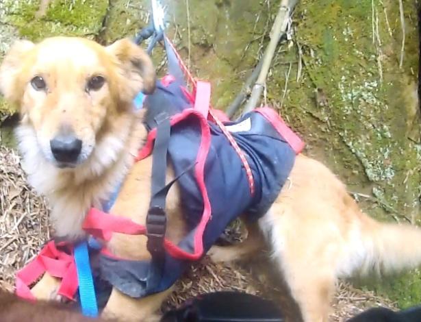 A cadela Safira foi resgatada com técnicas de rapel, 4 dias após cair de penhasco em SC