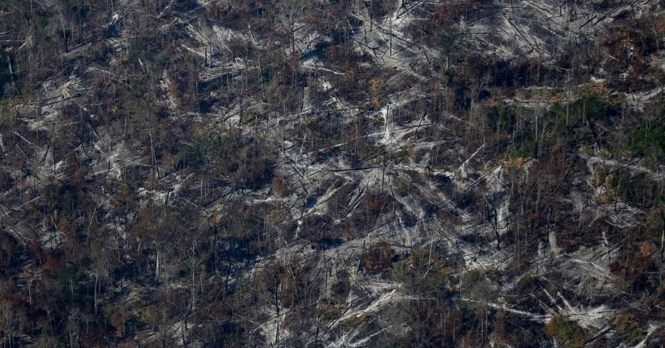 Floresta amazônica vira terra arrasada para posterior plantação de soja e uso para pecuária em Apuí, no Amazonas