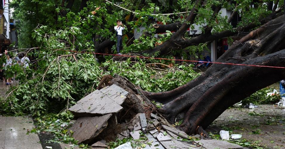 3.ago.2016 - Homem sobe em árvore derrubada após a passagem do tufão Nida para tirar uma foto, em Shenzhen, na província de Guangdong, também conhecida como Cantão. A passagem do tufão pela província, no sul da China, não causou mortes até o momento, mas já deixou prejuízos de pelo menos US$ 43 milhões