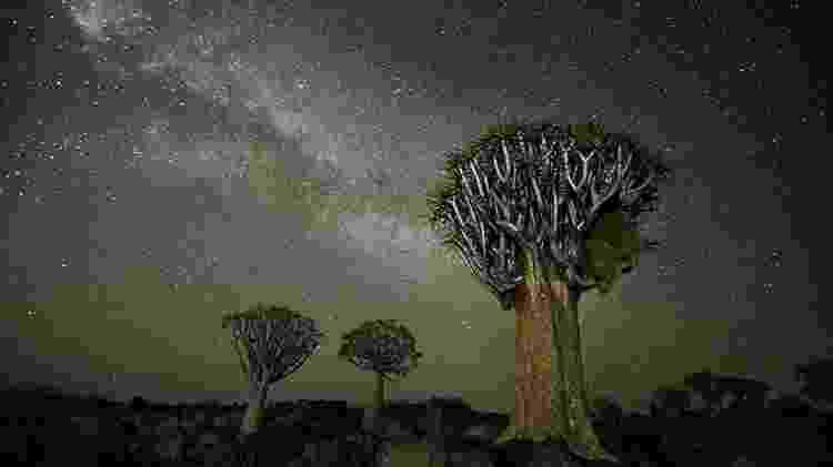 Na África, Moon escolheu fotografar árvores em meio às estrelas após estudar sobre a influência do cosmos no crescimento destas plantas - Beth Moon