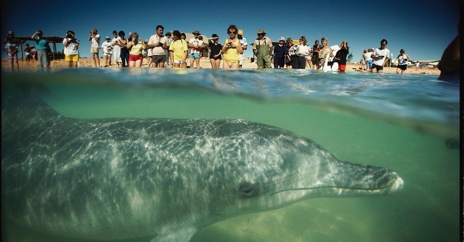 30.jun.2016 - Turistas na Austrália aproveitam para fotografar um golfinho quando este se aproxima em busca de companhia e peixes oferecidos pelas pessoas
