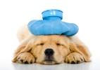 Clique Ciência: Animais também sofrem com enxaqueca? (Foto: Getty Images)
