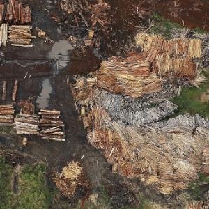 Desmatamento ilegal é alvo de operação da PF