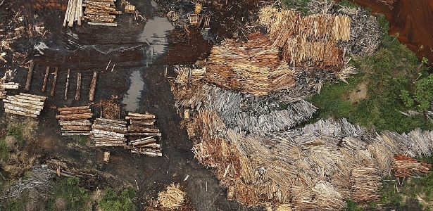 Madeira extraída ilegalmente são vistas perto de Rio Pardo, município de Porto Velho, em Rondônia - Nacho Doce/Reuters