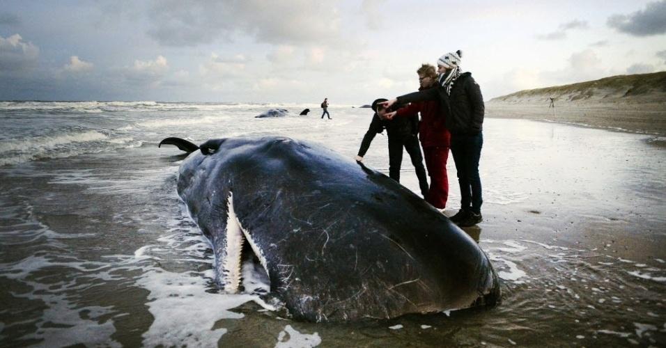 13.jan.2016 - Três pessoas observam um dos cinco cachalotes que encalharam em uma praia na ilha de Texel, na Holanda. Os cinco mamíferos morreram