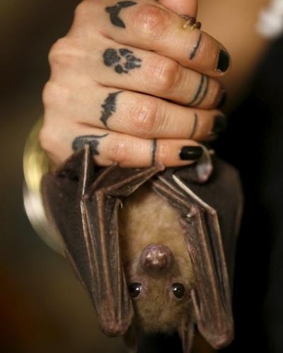 23.fev.2016 - Os morcegos que recebem cuidados da israelense Nora Lifschitz são morcegos da fruta egípcios