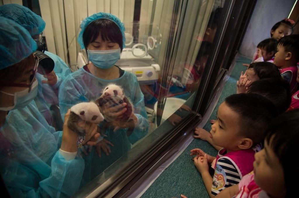 26.jul.2016 - Veterinárias apresentam os filhotes de pandas Dabao (à esq.) e Xiaobao (à dir.) para crianças em centro na China. Os gêmeos nasceram no dia 26 de junho e foram apresentados ao público para celebrar o primeiro mês de vida
