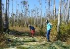 Trabalhadores em condições análogas à escravidão no Piauí - Divulgação/MPT