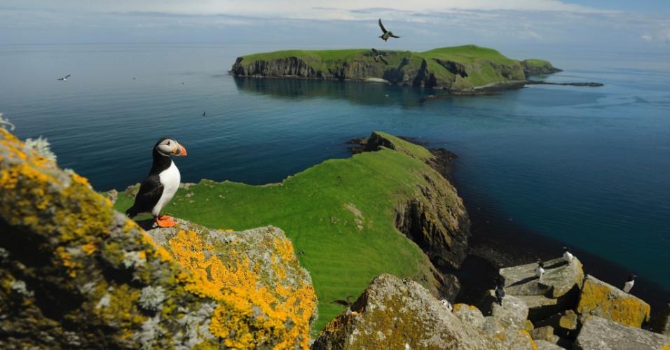 13.out.2015 - A torda-mergulheira (à direita) e o papagaio-do-mar (voando) encontram refúgio nas Ilhas de Shiant, na Escócia. Cerca de 8 mil tordas-mergulheiras e 200 mil papagaios-do-mar usam as ilhas como local de produção todos os anos