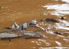 Associação dos Pescadores e Amigos do rio Doce
