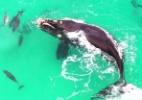Drone flagra baleia