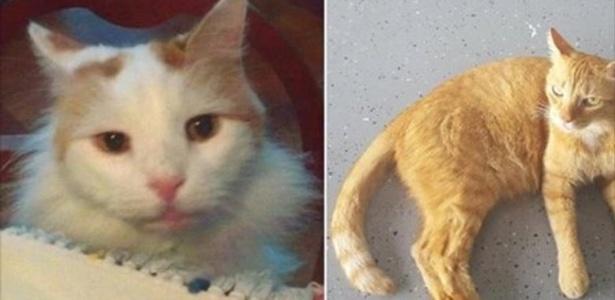 Os gatos Troy e Tiger herdaram US$ 300 mil após a morte de sua dona