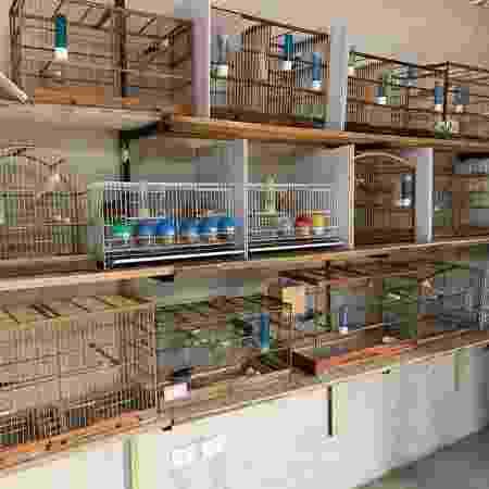 Polícia Federal deflagra operação que combate o tráfico de animais silvestres - Divulgação/PF