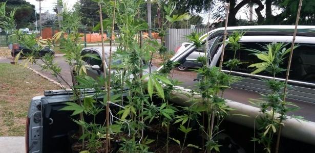 A plantação foi encontrada no campus Darcy Ribeiro, o maior dos quatro campi da UnB