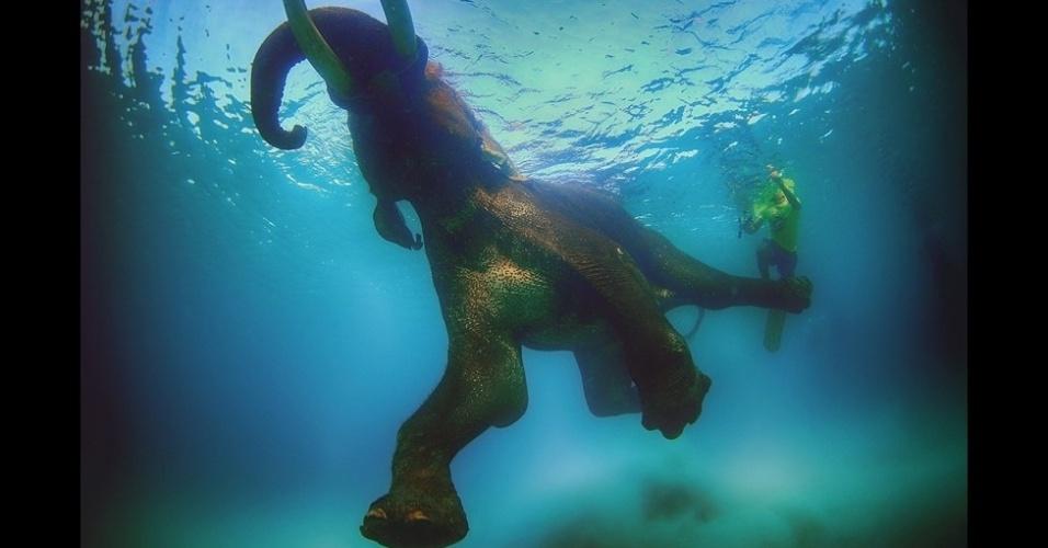 """5.fev.2016 - Ali Bin Thalith cresceu na costa de Dubai, nos Emirados Árabes, onde seu pai e seu avô eram pescadores de pérolas. Ele passou boa parte de sua infância na água ou assistindo aos filmes do cineasta francês Jacques Cousteau e, desde que se tornou fotógrafo, se especializou em imagens subaquáticas. Nadar com um elefante nos arredores das ilhas Andaman, no oceano Índico, """"foi um momento aterrorizante"""", conta Bin Thalith. """"Mas foi uma das minhas melhores experiências"""""""