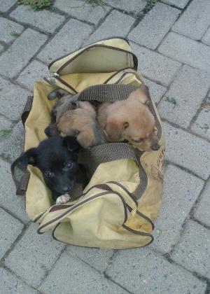 Filhotes abandonados recolhidos por integrantes da ONG Amigos da Rua, em São Francisco de Paula (RS)