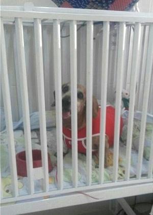 Paciente internado no Pronto Socorro Veterinário, em Uberlândia (MG)