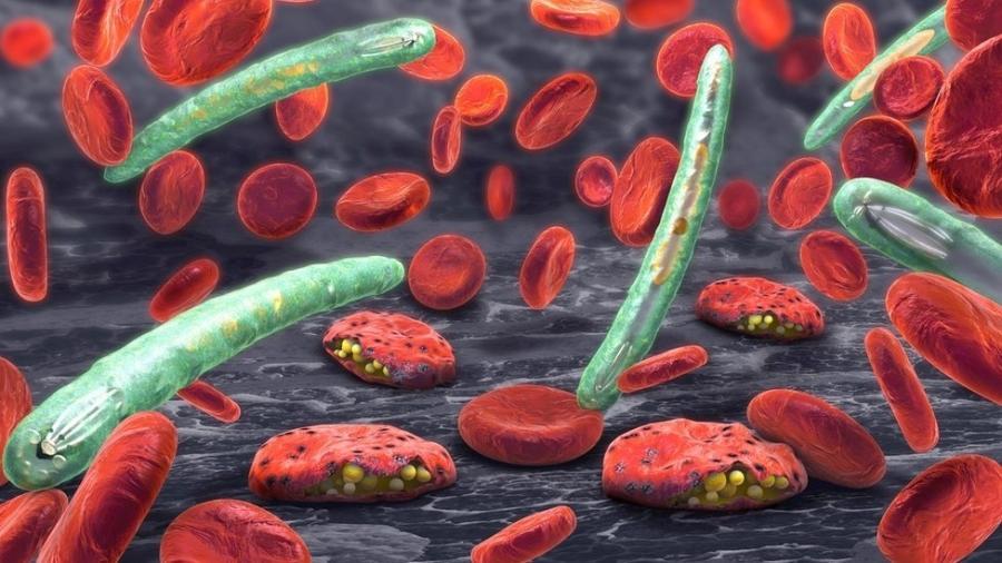 Plasmodium e células sanguíneas - Getty Images