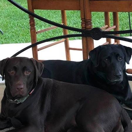 As labradoras Bella e Sadie pularam na maçaneta para abrir a porta e correram até a casa da vizinha - Maureen Hatcher/Facebook