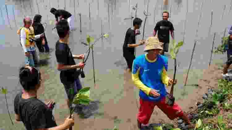 Plantar e restaurar florestas de mangue fornece proteção natural valiosa para costas vulneráveis - JELAJAH PANGANDARAN
