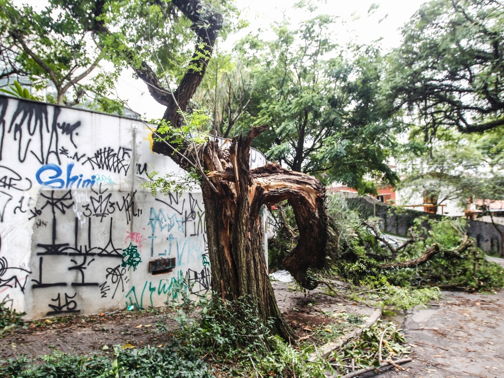 21.out.2016 - Forte chuva na cidade de São Paulo fez árvore se partir na rua Ourânia, esquina com rua Desembargador Ferreira França, no Alto de Pinheiros, zona oeste da capital paulista