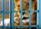 Os animais traumatizados resgatados de ruínas da guerra na Síria (Foto: Reprodução/BBC)