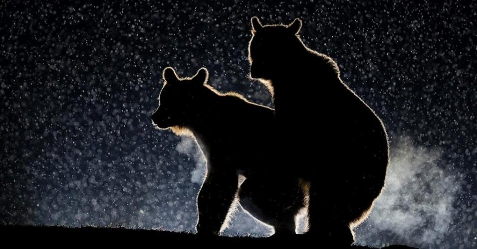 Flagra - O momento de amor desse casal de urso rendeu uma bela silhueta em Harghita, na Romênia
