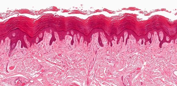 O novo órgão está presente abaixo da camada superior da pele (na imagem) e envolve diversos órgãos do corpo - Getty Images