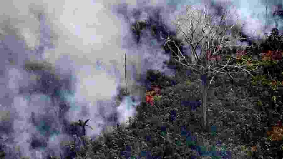 Incêndio na floresta amazônica, a 65 km de Porto Velho, em Rondônia, no norte do Brasil - Carl de Souza/AFP