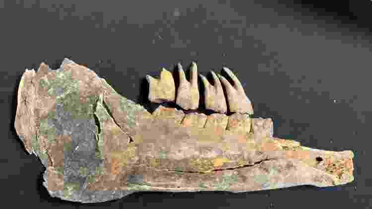fossil - Governo da cidade de Las Vegas/Divulgação - Governo da cidade de Las Vegas/Divulgação